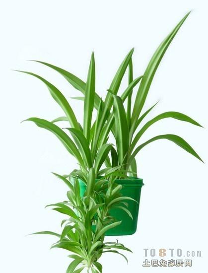 吸收甲醛的室内植物_哪种植物去甲醛最好_土巴兔装修问答