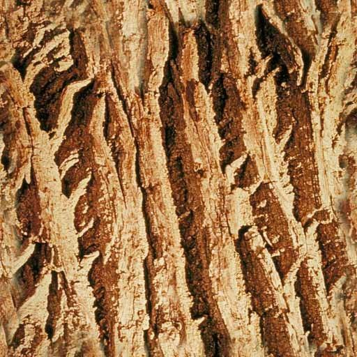 其它木纹壹叁柒素材图片..3dmax材质高清图片