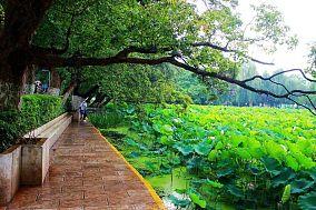 公园风景图欣赏