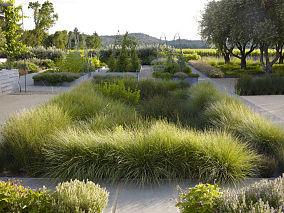 现代公园绿植欣赏图片