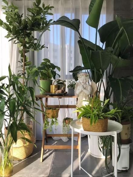 90㎡两居室,更有超美阳台植物角!阳台2图