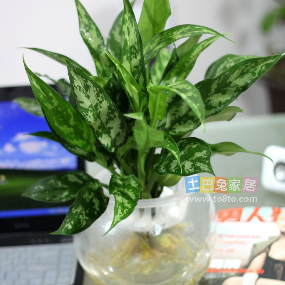 吸收甲醛的室内植物_301 Moved Permanently