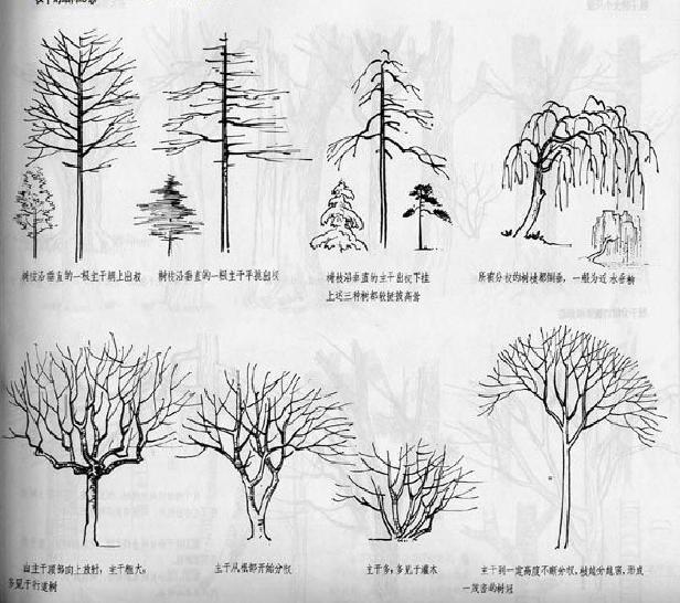 树的的画法和表现技法1 - 平面设计 - 云世界日