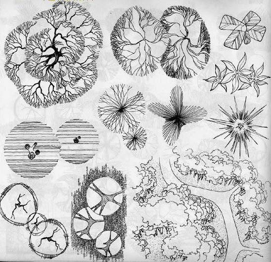手绘植物平面素材